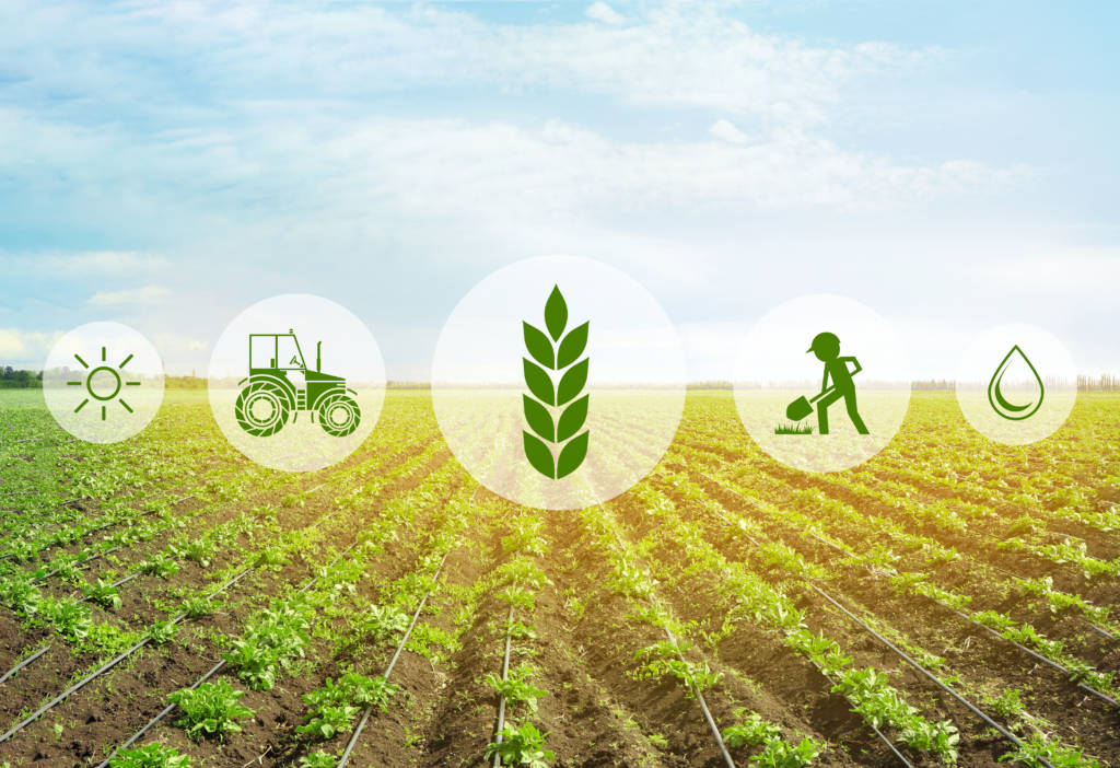 MX Precision Weight Grading for Agritech R&D